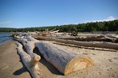 Dode boom op de kust Royalty-vrije Stock Afbeelding