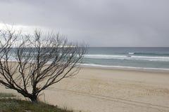 Dode boom op de kust Royalty-vrije Stock Foto