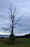 Dode boom op heuvel bij zonsondergang die ver meer overzien Royalty-vrije Stock Fotografie