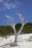 Dode boom op strand Stock Afbeelding