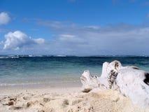 Dode boom op strand Royalty-vrije Stock Afbeelding