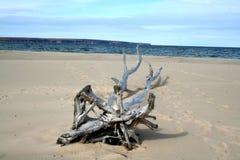Dode boom op zand Stock Foto's