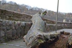 Dode boom in oude stad Royalty-vrije Stock Afbeeldingen