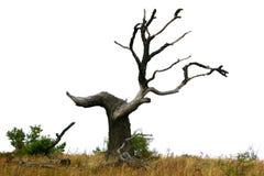 Dode boom tegen overwhite Stock Foto