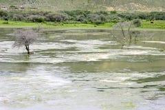 Dode boom in verontreinigde rivier Stock Foto