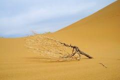 Dode boom in woestijn Stock Afbeeldingen