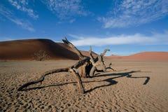 Dode boom in woestijn royalty-vrije stock fotografie