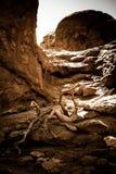 Dode boom in woestijnlandschap Stock Fotografie