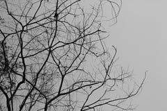 Dode boom zonder bladeren Stock Foto's