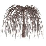 Dode boom zonder geïsoleerde bladeren. Royalty-vrije Stock Foto's