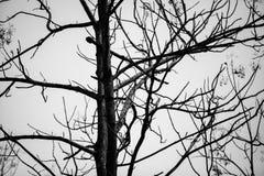 Dode boomachtergrond met uit blad royalty-vrije stock afbeelding