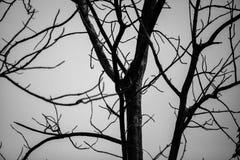 Dode boomachtergrond met uit blad royalty-vrije stock foto