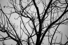 Dode boomachtergrond met uit blad stock fotografie