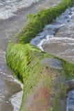 Dode boomboomstam op een strand Stock Fotografie