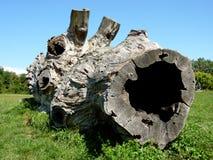 Dode boomstam op gras Stock Afbeelding