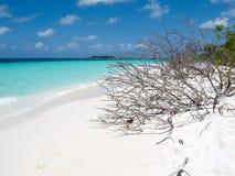 Dode boomstammen op eilandparadijs stock fotografie