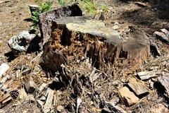 Dode Boomstomp bij het Meer van de Houtcanion, Coconino-Provincie, Arizona, Verenigde Staten royalty-vrije stock afbeelding