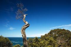 Dode boomtak met oceaanachtergrond stock foto's