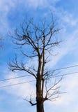 Dode boomtakken tegen blauwe hemel Stock Afbeelding
