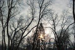 Dode boomtakken tegen blauwe hemel Stock Foto's