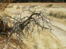 Dode boomwortels Stock Afbeelding