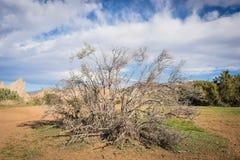 Dode Borstel in Mojave-Woestijn Royalty-vrije Stock Foto