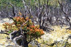 Dode bossen in de bergen royalty-vrije stock foto's