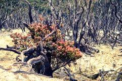 Dode bossen in de bergen stock fotografie