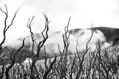 Dode bossen in de bergen stock afbeelding