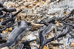 Dode bossen in de bergen royalty-vrije stock afbeelding