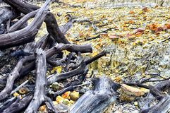 Dode bossen in de bergen stock afbeeldingen