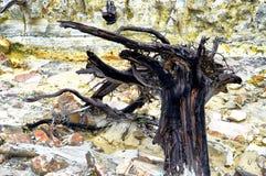 Dode bossen in de bergen royalty-vrije stock foto
