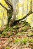 Dode die bomen met mos op een heuvel van stenen worden behandeld Royalty-vrije Stock Afbeeldingen