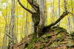 Dode die bomen met mos op een heuvel van stenen worden behandeld Stock Afbeelding