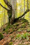 Dode die bomen met mos op een heuvel van stenen worden behandeld Royalty-vrije Stock Foto's