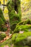 Dode die bomen met mos op een heuvel van stenen worden behandeld Stock Foto's