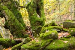 Dode die bomen met mos op een heuvel van stenen worden behandeld Stock Foto