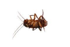 Dode die kakkerlakken op wit worden geïsoleerd royalty-vrije stock foto