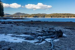 Dode die wortels van pijnboomboom in ijs bij de winter worden behandeld, landschap, het meer van Shiroka Polyana Stock Fotografie