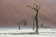 Dode droge bomen van DeadVlei-vallei bij Namib-woestijn Royalty-vrije Stock Fotografie