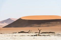 Dode droge bomen van DeadVlei-vallei bij Namib-woestijn Royalty-vrije Stock Afbeeldingen