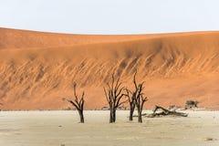 Dode droge bomen van DeadVlei-vallei bij Namib-woestijn Stock Foto
