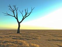 Dode eenzame boom in de woestijn Stock Afbeeldingen