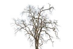 Dode geïsoleerde bomen stock afbeelding