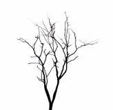 Dode geïsoleerde boomtakken stock foto's
