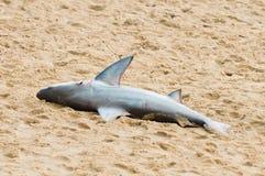 Dode haai op strand Stock Foto's