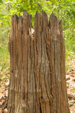Dode houten stomp Royalty-vrije Stock Foto