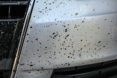Dode insecten op auto voordiebumper, met insect het schoonmaken spra wordt behandeld royalty-vrije stock foto's