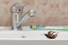 Dode kakkerlak op de gootsteen op de achtergrond van de de watertapkraan en tandenborstel stock foto's