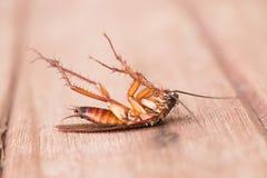 Dode kakkerlakken royalty-vrije stock afbeelding